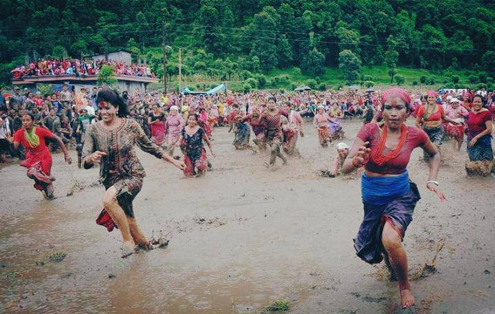 National paddy day or Ashad 15 festival in Nepal.