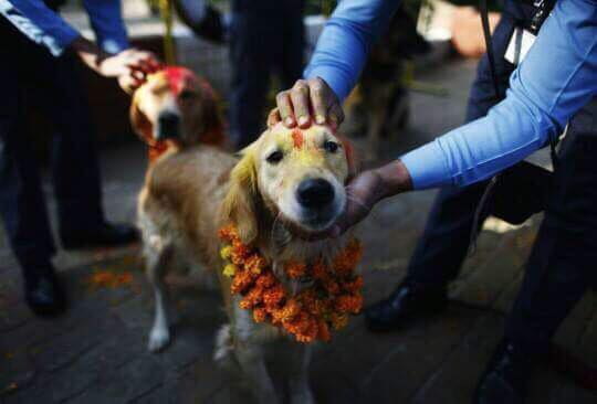 Dog festival, also known as Kukur Tihar in Nepal compared to Yulan meat festival, China.