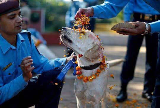Dog festival, also known as Kukur Tihar in Nepal compared to Yulan meat festival, China
